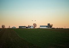 geesefieldfarm (Jen MacNeill) Tags: rural country landscape light pennsylvania pa lancater county barn amish farm farms ag agriculture sunset geese flying field