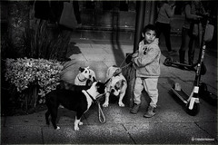 Untitled (khalidhameed0110) Tags: blackandwhite blackandwhitephotography blackwhite blackwhitephotography monochrome streetphotography streetphoto street streetviewphoto streetview streets boy child photoman666 photography photographer cdmx mexico mexicocity dogs puppy fujifilm fujifilmxt2 xf35mm dog people animal