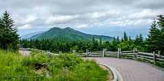 Mt Craig from Mt. Mitchell Summit Trail @ Mt Mitchell State Park - Yancey County, NC (Paul Diming) Tags: pauldiming path 2018asheville stateparks landscape burnsvillenorthcarolina apalachianmountains northcarolina mountmitchellstateparkmountain summit dailyphoto parks pathway yanceycounty blackmountains drelishamitchell mtmitchellsummittrail northcarolinastateparks blackmountainsrange park scenic trail summer mountmitchellstatepark d7000 yanceycountynorthcarolina statepark burnsville unitedstates us