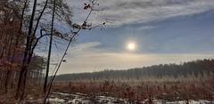 Las (ewacykada) Tags: las zima drzewa