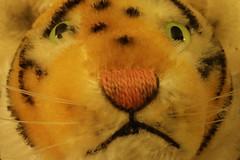 Daniel the hand puppet (lenswrangler) Tags: lenswrangler macro tiger macromondays fuzzytoy picktwo handpuppet mrrogers daniel puppet
