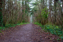 Peak Hill-1-2 (Sheptonian) Tags: somerset rural scenic landscape trees fauna grassland