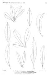 beitrgezurpal04wien_0241 (kreidefossilien2) Tags: velenovský bohemiancretaceousbasin bohemian czech republic palaeobotany flora kieslingswalde