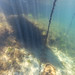 St Leonards Pier Underwater-28