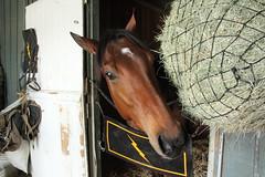 Horsey (vtpoly) Tags: horses face horse santaanitapark arcadia california barn stable polywoda brown hay