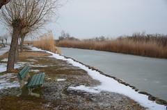 Sula Mörbischis (anuwintschalek) Tags: nikond7000 d7k 18140vr austria burgenland mörbisch mörbischamsee seebadmörbisch neusiedlersee järv see lake tauwetter sula thaw jää ice eis talv winter january 2019 kõrkjad reeds schilf pink bank bench kanal