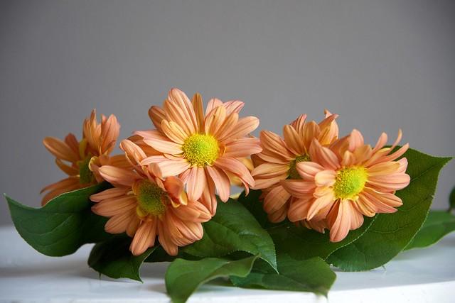Обои листья, цветы, flowers картинки на рабочий стол, раздел цветы - скачать