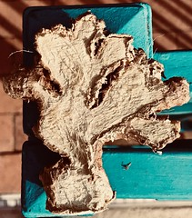 """Dried Ginger Root Tree Sculpture (Chic Bee) Tags: iphone7plus colorful colorscolorescolourscouleurs artistic artist art sculpture """"gingerroottree"""""""