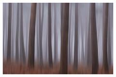 Abstract Trees using ICM (dandraw) Tags: abstract trees woods woodland creativephotography creative artistic art icm blur minimal simple lines fog fuji fujifilm xt3 landscape outdoors