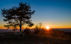Sunset on the vineyard hills... (der LichtKlicker) Tags: ihringen kaiserstuhl baden breisgau hills hügel berge vogesen vosges black forest schwarzwald rhein rhine plane ebene aussicht view tree baum sonnenuntergang sonne sun sunset sunrays sonnenstrahlen vineyard weinberg fujifilm xh1 xf1024mm wide angle weitwinkel evening abend abendstimmung lichtklicker