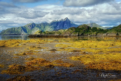 Yellow algae of Vestvågøya island (marko.erman) Tags: norway nordland village fishermen sea mountains water clouds beautiful sony scenic idyllic nature outdoor outside travel popular quiet serenity pure transparency landscape nordic steep sunny montagne ciel paysage eau lac mer dwelling reflections lofoten panorama baie océan vestvågøya colorful color yellow couleur jaune sky waterscape