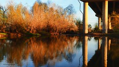 Under The Bridge (VGPhotoz) Tags: underthebridge arizona usa reflections water bridge trees bushes calm peace relax concrete nature natural pond river artisticphotography art photography naturephotography funpics olympus em1markii m1442mm f3556 ƒ63 170 mm 1160 200 underthebridgesometime january 2019
