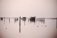 Porto Caleri ! (paolotrapella) Tags: rosolinamare porto caleri waterscape boats barche