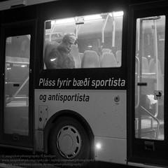 Die Fenster von Reykjavik (Agentur snapshot-photography) Tags: 012200 012300 08003000 alltag architecture architektur bevölkerung bus einblick einblicke fenster gesellschaft hauptstadt iceland isl island isländisch lebensalltag lebenswelten momentaufnahme nahverkehr öffentlicherpersonennahverkehr öpnv personen personennahverkehr publictransport reykjavik reykjavíkurborg schnappschuss strassenszene symbol symbolbild symbolfoto symbolfotos symole verkehr window windows wohnen wohnwelten