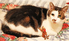 """Igor and his friend, Rudolph (kirstiecat) Tags: cat feline meow catmas christmas holiday merrychristmas meowycatmas furry chat gato gata chatte katze diagonals colour color """"happy holidays"""" canon kitty rudolph reindeer rudolphtherednosedreindeer"""