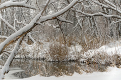 Cherry Creek - After Overnight Snow (dcstep) Tags: dsc5701dxo sonya7riii fe100400mmf4556gmoss cherrycreek snow cherrycreekstatepark colorado greenwoodvillage usa allrightsreserved copyright2019davidcstephens dxophotolab221 nature urban urbannature