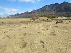 Playa Cofete (SweetDisposition95) Tags: dream beach paradise fuerteventura cofete playa footprints golden sand mountains