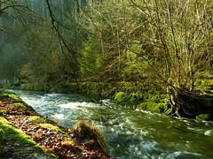 Natur (isajachevalier) Tags: fluss wasser wald kirnitzsch kirnitzschtal elbsandsteingebirge sächsischeschweiz landschaft natur sachsen panasonicdmcfz150