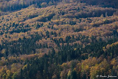 Autumn in forest (darko.jakovac) Tags: nikon d750 nikond750 sigma 150600 sigma150600 contemporary telephoto dolenjska slovenija slovenia slowenien discover explore trip travel traveling relax view viewpoint ngc outdoor outdoors outside hiking adventure perspective activities roam visit environment explorers ecological nature landscape scenery scenic idyllic beauty beautiful season seasonal unique perfect superb magnificient stunning impressions outstanding popular colors colorful postcard wallpapper countryside rural jesen fall autumn gozd forest magic
