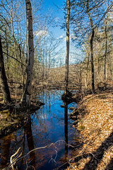 Woodland stream along Moose Hill Road (Bob Gundersen) Tags: bobgundersen robertgundersen gundersen nikon nikoncamera nikond600 d600 guilford ct conn connecticut connecticutscenes country usa glct guilfordlandconservationtrust photo picture places park scenes westwoods westwoodstrails statepark landscape outside outdoor tree forest flickr nature stream water spring