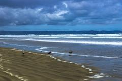 Another 89 to go (Sarah Fraser63) Tags: nz newzealand 90milebeach beach coast sand northland sky clouds nature coastline sonya77 outdoors