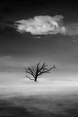 Botany Bay 8673 (Athena Carey) Tags: botanybay summer 2016 monochrome tree ocean sea atlantic southcarolina sc usa south