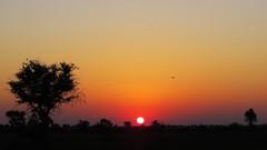 Botswana sunrise in Okavango Delta (h0n3yb33z) Tags: botswana animals wildlife sunrise okavangodelta africa