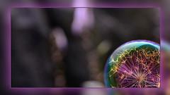 1 Flowerbulb (andantheandanthe) Tags: creative creativity closeup close up macro trix photoshop adobe kreativ kreativitet närbild makro kreativer herauf makrotix créativité créative gros plan fine creativa del primo piano di creatività sulla creatividad primer plano snow snö coloured bubble colored flower plant