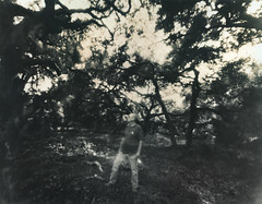 The Black Night Calls My Name (micalngelo) Tags: analog filmphoto pinhole 4x5pinhole papernegative forest trees toycamera toycameraphotography lomojunkie lomography