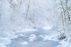 White Wall (Michael Bollino) Tags: eaglecreek snow winter oregon columbiarivergorge outside forest trees snowfall deep water creek pacificnorthwest