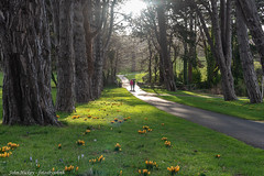 Cabinteely Park - DSC_0102 (John Hickey - fotosbyjohnh) Tags: 2019 cabinteelypark february2019 dublin dunlaoghairerathdowncouncil ireland flowers trees publicpark nature grass park parkland parksdepartment people landscape outdoor