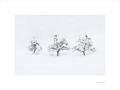 Las formas del invierno (E. Pardo) Tags: invierno winter formas formen forms árboles trees bäume nieve schnee snow steiermark austria