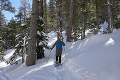 Snowshoeing Mt. San Jacinto (Danielle_M_Bedics) Tags: mtsanjacinto snow hike hiking snowshoeing palmspringsaerialtramway nature winter solstice cabin camping roundvalley palmsprings longvalley wellmansdivide sports wintersports activities pine trees limberpine jefferypine