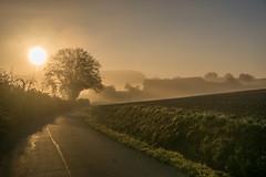 Wake up (*SanM.*) Tags: préizerdaul bettborn pratz sunrise sonnenaufgang luxemburg sun sonne landscapes nature trees bäume morgen morning felder fields europe autumn herbst platen reimberg