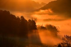 DSC_2448 (griecocathy) Tags: paysage brume montagne arbre rayon soleil gelée jaune orange brun sombre lumineux rosée