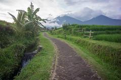 around Jatiluwih (kuuan) Tags: manualfocus mf voigtländer15mm cvf4515mm 15mm bali indonesia sonynex5n riceterace jatiliwuh tabanan view mountbatukaro footpath irrigation subak