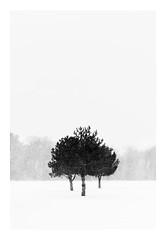 3 in 1 (bprice0715) Tags: canon canoneos5dmarkiii canon5dmarkiii landscape landscapephotography nature naturephotography beautiful beauty beautyinnature peaceful serene winter snow snowylandscape snowing highcontrast highkey trees fineart cold frigid blackandwhite bw blackwhite monochrome mono minimalism
