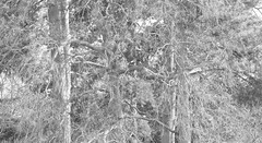 _B5A1996REWS 2200 Graphite, © Jon Perry, 17-3-19 zbp (Jon Perry - Enlightenshade) Tags: jonperry enlightenshade arranginglightcom kew kewgardens 17319 20190317 bw blackandwhite trees