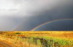 At the End of the Rainbow (Patricia Henschen) Tags: alamosa colorado alamosanationalwildliferefuge nationalwildliferefuge rainbow clouds wetland sunshine storm