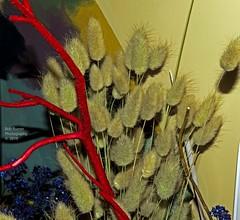 Pussy Willow (rumerbob) Tags: pussywillow flower floral flowergarden fauna flowerphoto botany botanicalgardens botanical philaflowershow nature naturewatcher naturephotography canon7dmarkii canonef247028liiusm
