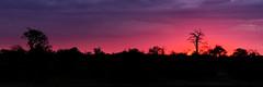 Sunset in Africa (joseaugustombm) Tags: africa wild thornybushgamereserve áfricadosul za