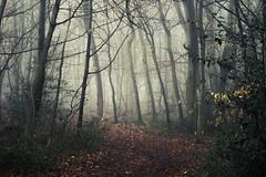 Tunnel of Light (Netsrak) Tags: baum bäume eu eifel europa europe forst landschaft natur nebel rheinland rhineland wald fog forest mist nature outdoor trees winter woods