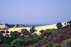 oasi, deserto e mare (Alberto Cameroni) Tags: primefilm cyberviewx2v51425 sardegna agosto dune nikon kodak diapositiva pellicola analogica piscinas mare ingurtosu arbus