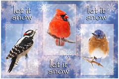 Happy Holidays! (cheryl.rose83) Tags: christmas card birds downeywoodpecker cardinal bluebird easternbluebird