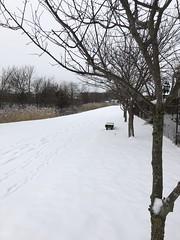 snowy path (ladybugdiscovery) Tags: bench winter path walk