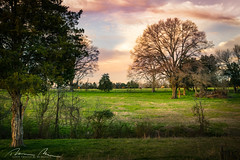 miller's spring (McMannis Photographic) Tags: photography pastoral destination southcarolina landscapeandnature travel millersfield agrarian bucolic explore farms sc southeast tourism