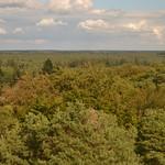 Uitzicht op het bos vanaf de uitkijktoren Besthmenerberg (134FJAKA_1805) thumbnail