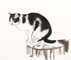 Felixou (Isaszas) Tags: drawing cat chat enclos refuge shelter felix dessin sketch croquis noiretblanc blackandwhite