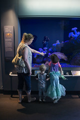 Admiring Creatures (evaxebra) Tags: long beach aquarium pacific aquariumofthepacific california dawn 2019 luna mermaid ariel costume ash tagyourrags mickey animal sea