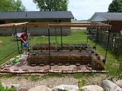 P1080770 (LPompey) Tags: garden strawbale strawbalegarden gardening
